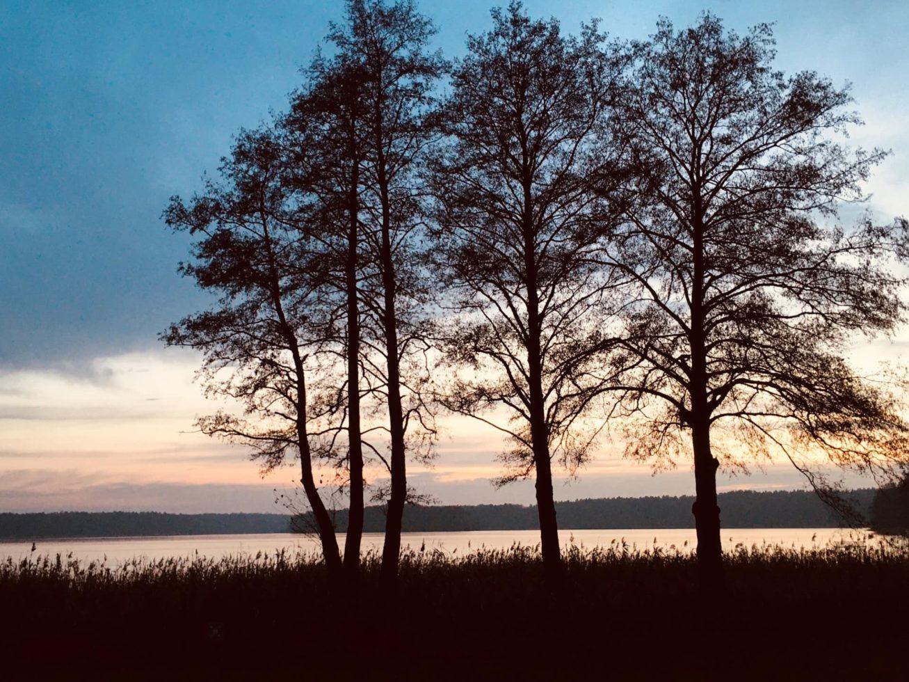 Heldenreise Uckermark Bäume am See